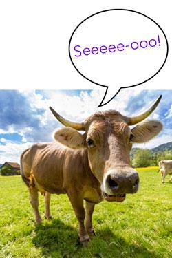 SEO koe